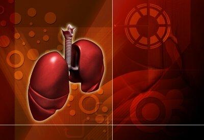 Pfizer lung cancer drug Lorbrena FDA approval