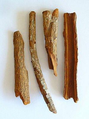 Cinchona officinalis, Rubiaceae, Quinine Bark,...