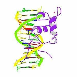 Estrogen-related receptor beta